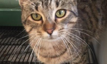 eParisExtra Cat of the Week