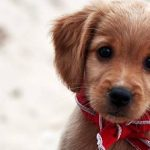My visit to the Paris Animal Shelter – Adoption event tomorrow