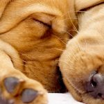 Lamar County Humane Association adoption event tomorrow