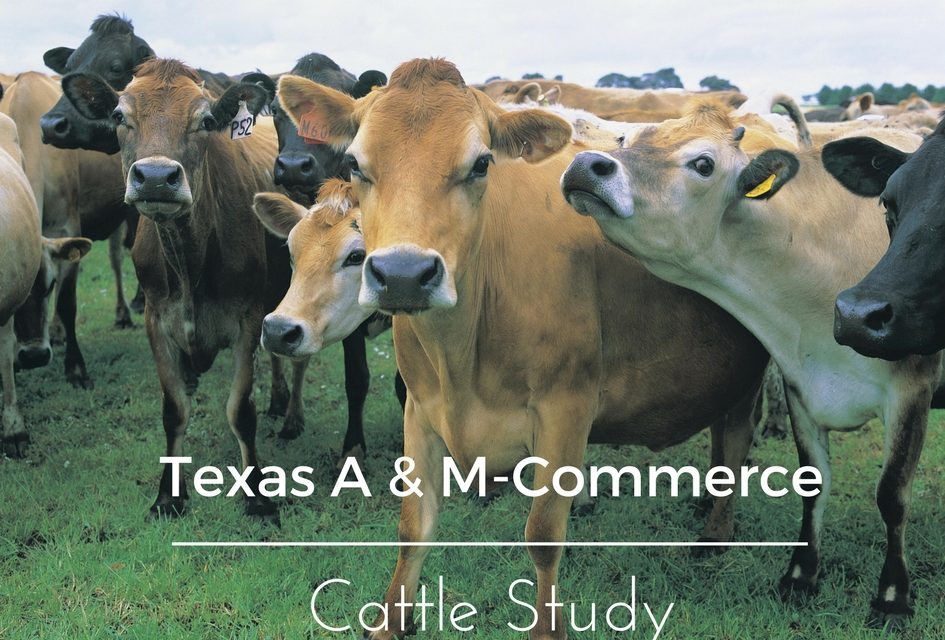 Texas A & M – Commerce to conduct study on the Effects of Yeast Metabolites on the Performance of Freshly Weaned Beef Calves