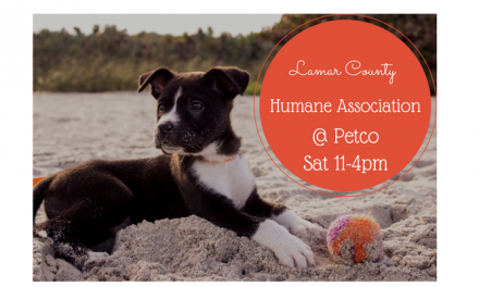 Adopt a Pet this Saturday | Lamar County Humane Association