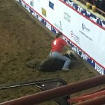 Roxton FFA attend San Angelo calf scramble