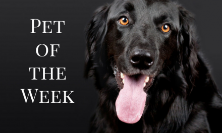 eParis Animals of the Week – Come meet them!