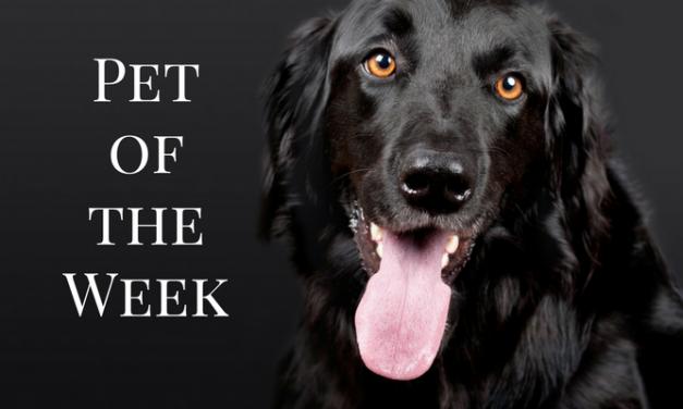 Introducing eParis animals of the week