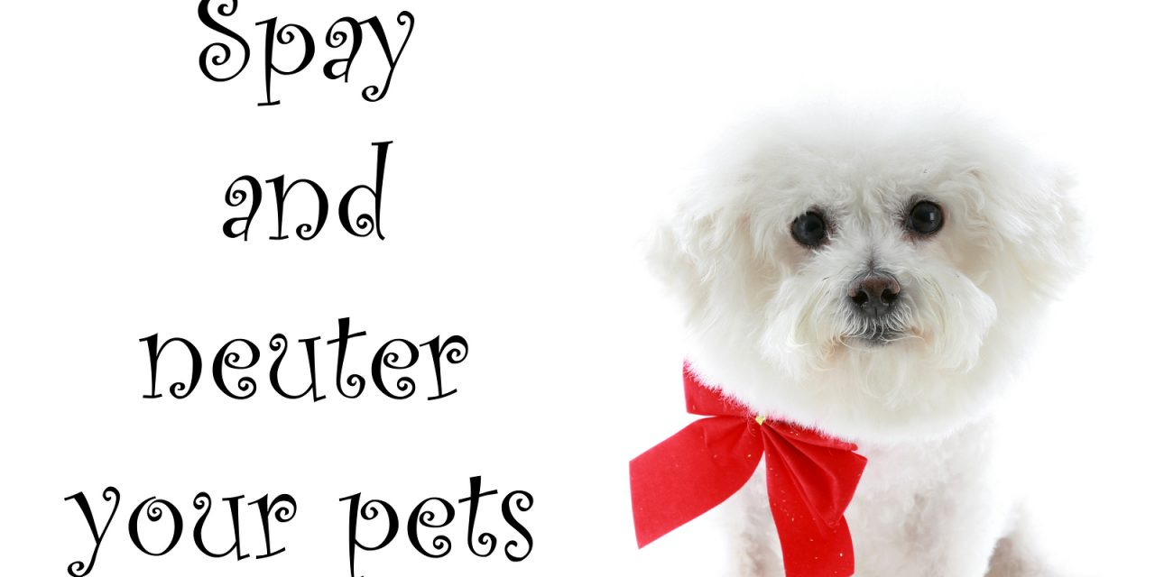 Spay and Neuter Clinic this weekend