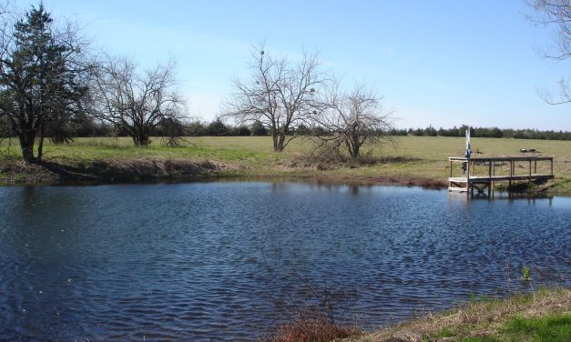 Beautiful 20.55 acres with a pond for fishing