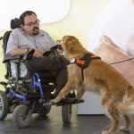 """Texas House Bill would punish owners who use""""fake"""" service dogs"""