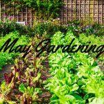 May Gardening