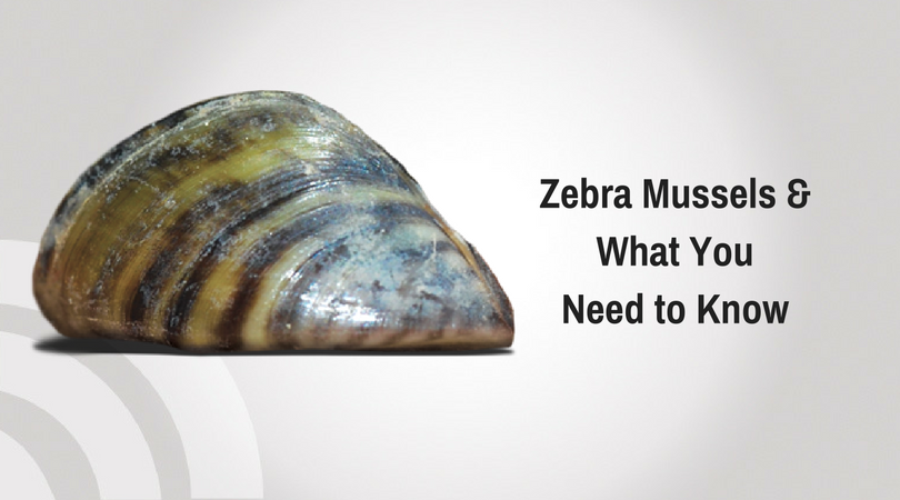 annotated bibliography zebra mussels