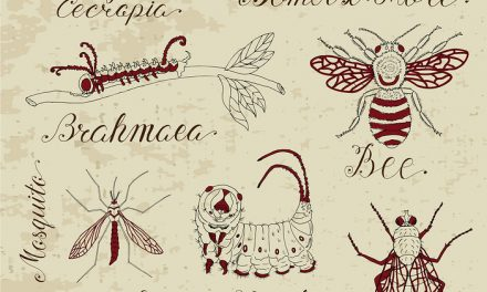 Entomology – the study of insects