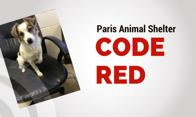 Paris Animal Shelter at CODE RED – Consider Adopting Today!