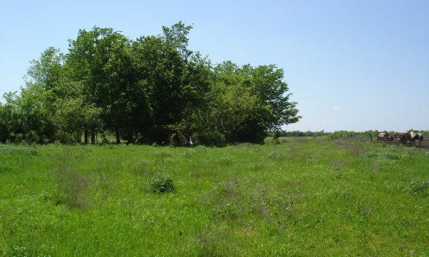 Land for sale in Northeast Texas