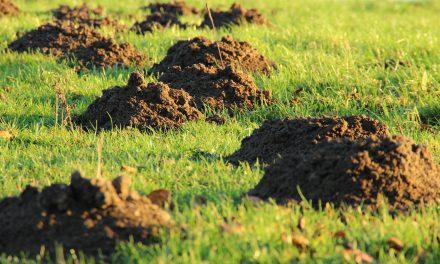 Moles, Voles, and Holes