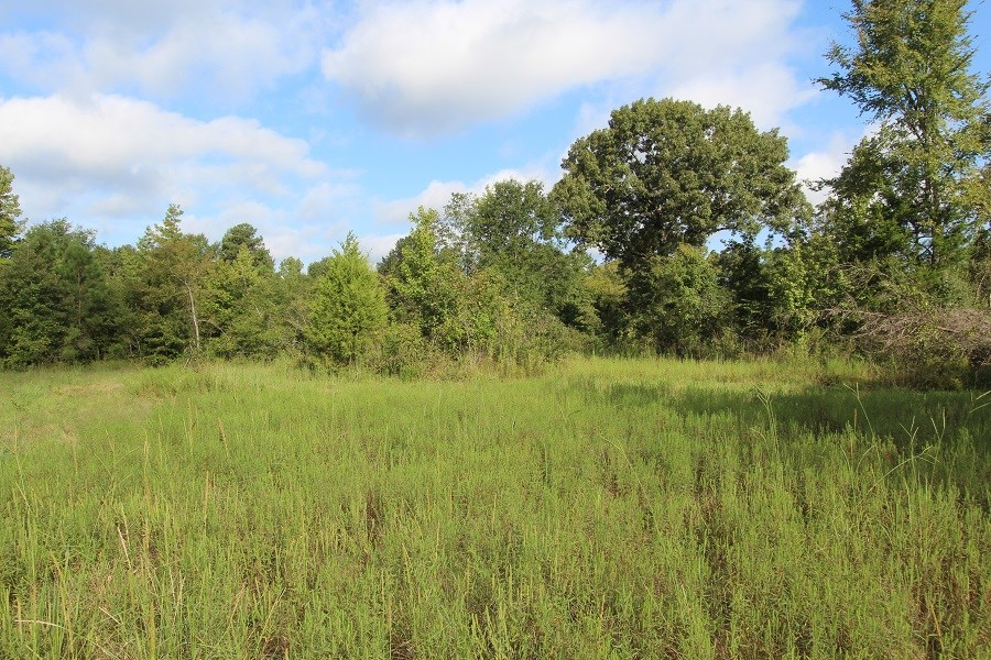 Large hunting land for sale in Northeast Texas/ Red River County