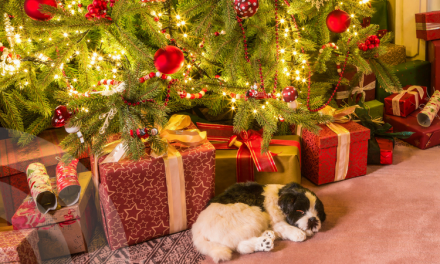Tips to keep your pets safe during holiday festivities