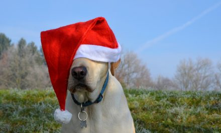 Christmas critters to fill the square Saturday for Santa Paws for a Cause