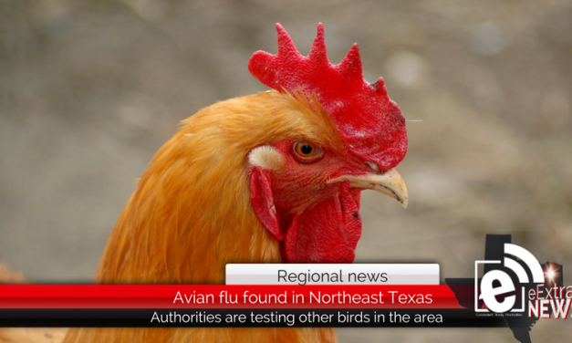 Avian flu found at Northeast Texas chicken farm