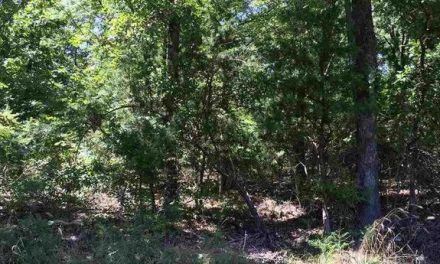 9.81 wooded acres for sale in Northeast Lamar County