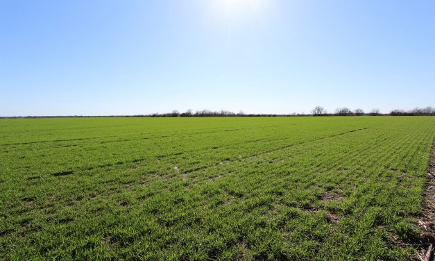 Large row crop farm for sale in Northeast Texas
