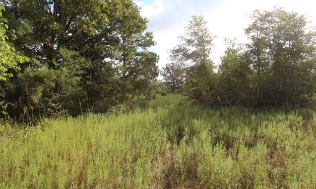 Recreational and Hunting land for sale in Clarksville, Texas
