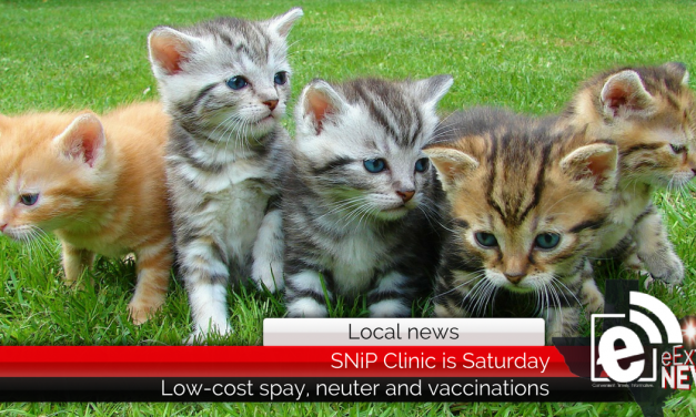 Low-cost spay/neuter clinic set for Saturday in Paris