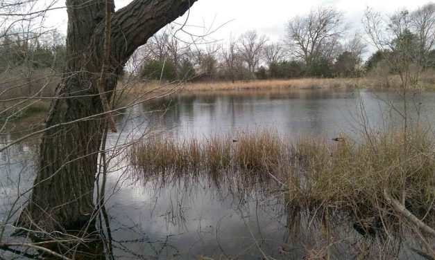 351 acres for sale in Bogata, Texas || $844,130