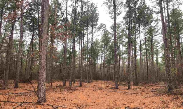Recreational property for sale in Bagwell, Texas    $274,500