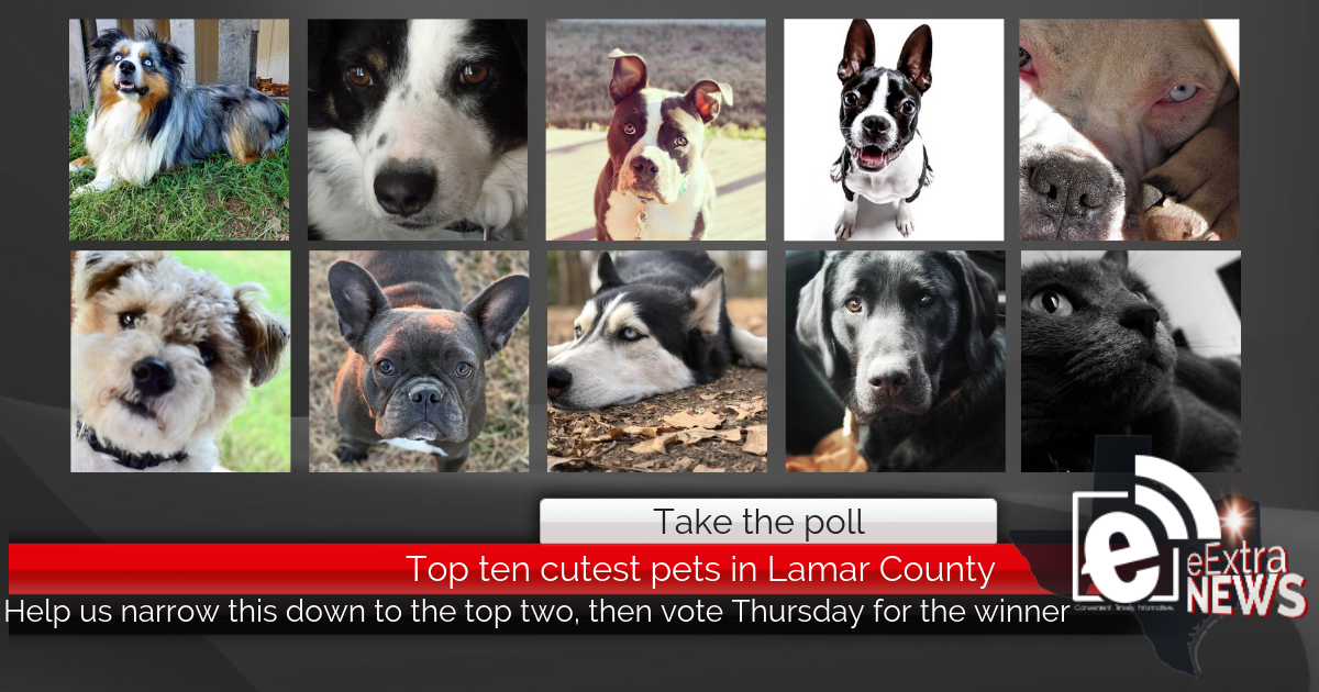 Take the poll: Cutest Pets in Lamar County Contest