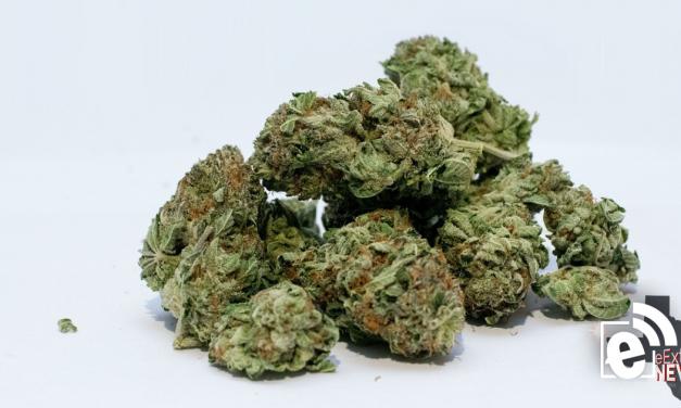 Poll: Should Texas decriminalize marijuana this year?