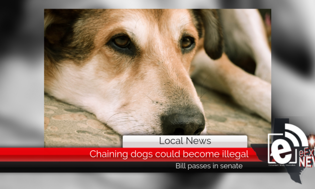 Chaining dogs could become illegal || Bill passes in senate