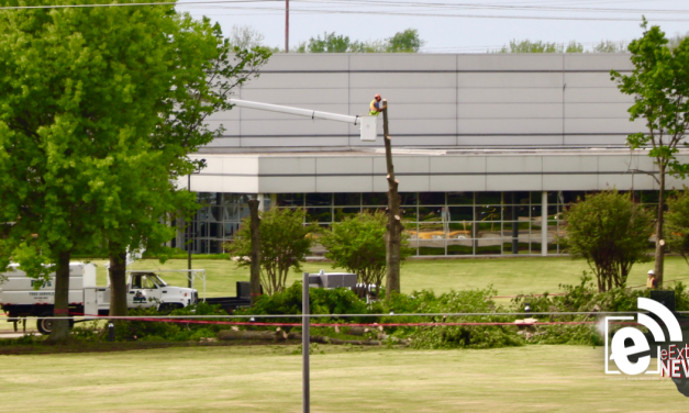 Kimberly-Clark cuts down decades-old trees    Part of plant's improvement plan