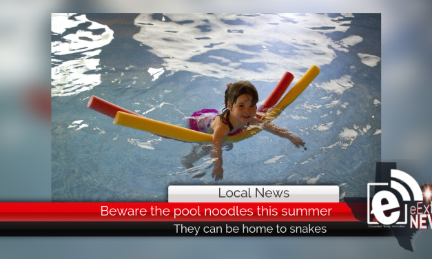 Beware the pool noodles this summer || They can be home to snakes