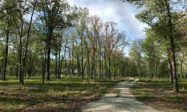 113.47 Acres for sale in Cuthand, TX || $430,000