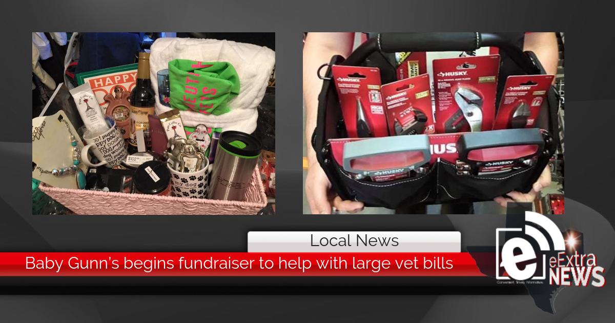 Baby Gunn's begins fundraiser to help with large vet bills