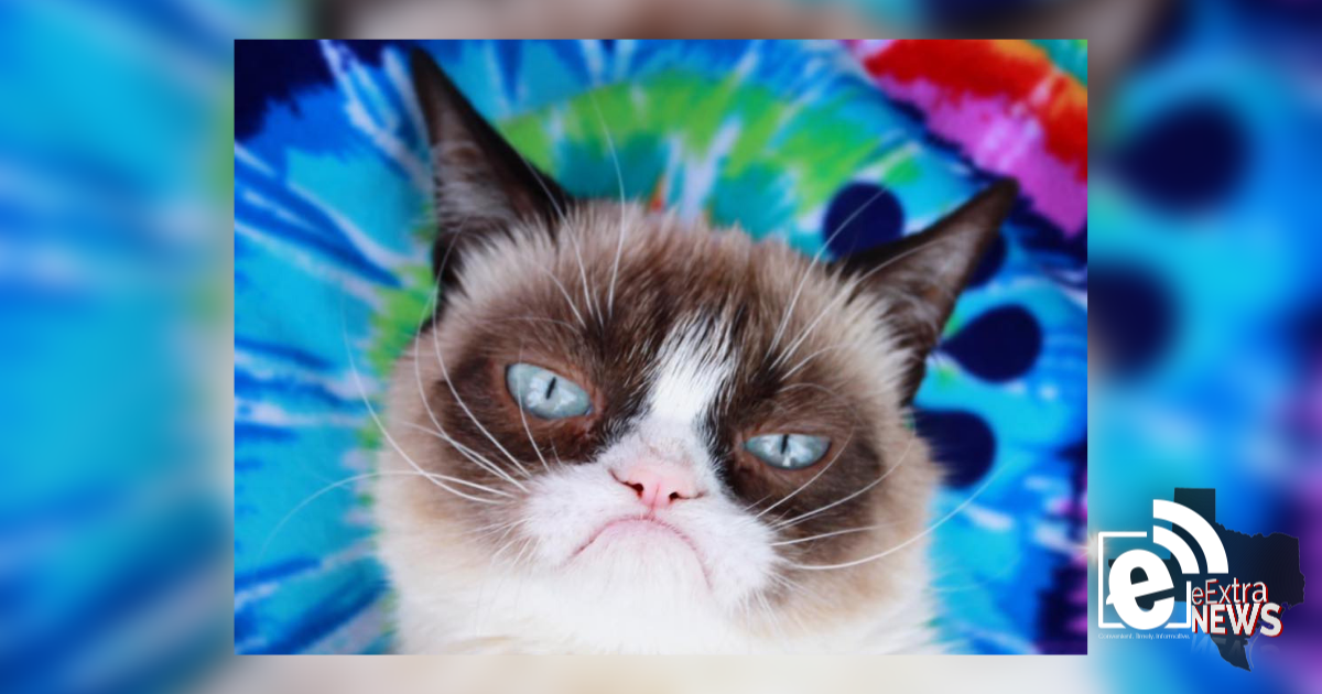 Grumpy Cat, internet's famed fretful feline, died at seven